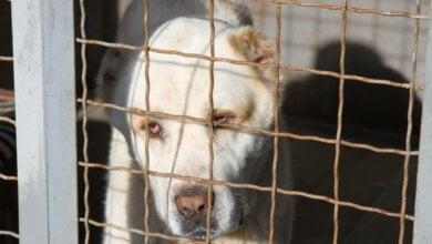 Photo of Четвероногого друга и охранника можно бесплатно взять из Центра защиты животных