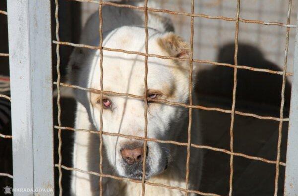 Четвероногого друга и охранника можно бесплатно взять из Центра защиты животных | Корабелов.ИНФО