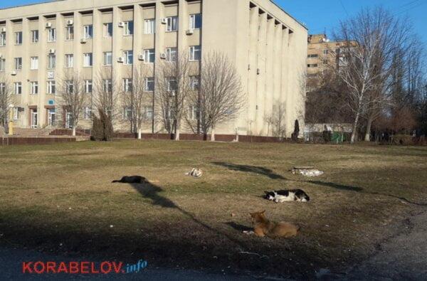 Бродячие собаки в Корабельном: то бросаются на людей, то греются на солнышке перед зданием администрации района | Корабелов.ИНФО
