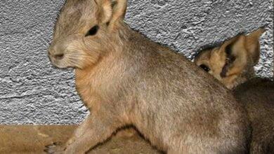 В Николаевском зоопарке родились марята и мунтжак   Корабелов.ИНФО