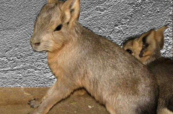 В Николаевском зоопарке родились марята и мунтжак | Корабелов.ИНФО