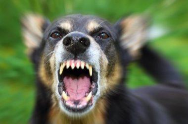 «Умирать будем тихо»: укушенная бродячей собакой жительница Николаева жалуется на бездействие властей   Корабелов.ИНФО