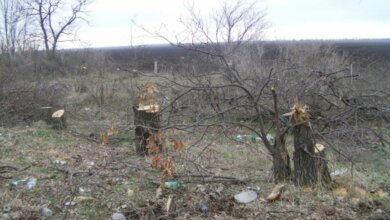 В Николаевской области массово вырубают лесополосы: «Мы стоим на грани экокатастрофы...» | Корабелов.ИНФО