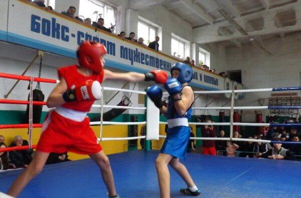 Боксеры-новички из Корабельного района достойно показали себя в боях за первенство | Корабелов.ИНФО image 1