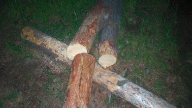 В Корабельном районе Николаева незаконно рубят лес по ночам | Корабелов.ИНФО image 2