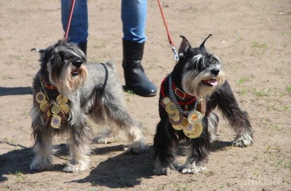 Более 150 породистых собак на глазах николаевцев сразились в рингах | Корабелов.ИНФО