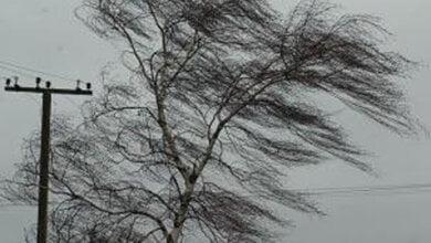 Сильный ветер, местами заморозки обещает гидрометцентр николаевцам | Корабелов.ИНФО