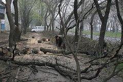 В Корабельном районе Николаева на снос и кронирование деревьев потратят полмиллиона гривен из бюджета | Корабелов.ИНФО