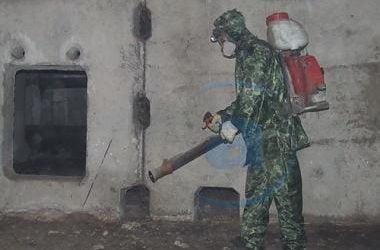 Борьбой с насекомыми и с грызунами в жилом фонде Николаева займется галициновская «Медицинская дезинфекция»   Корабелов.ИНФО