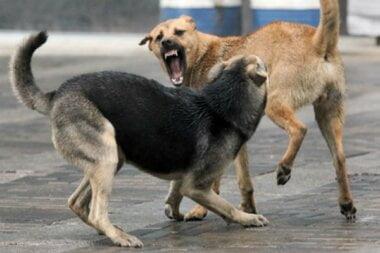 В Корабельном районе свора собак напала на женщину, ей ампутировали руку