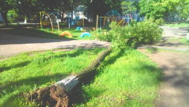 Рядом с детской площадкой в Корабельном районе рухнуло дерево | Корабелов.ИНФО image 1