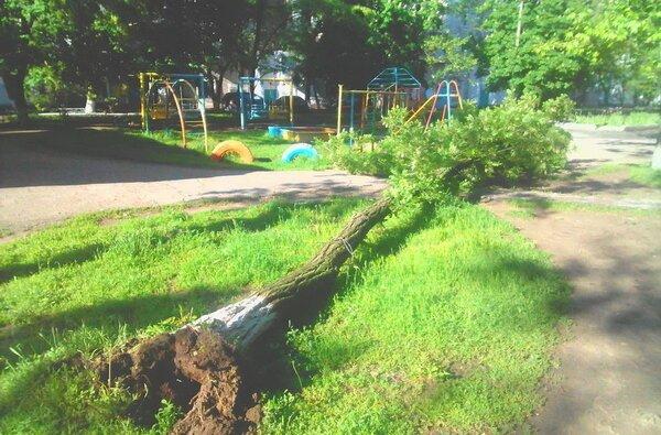 Рядом с детской площадкой в Корабельном районе рухнуло дерево   Корабелов.ИНФО image 1