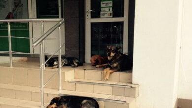 Photo of Мамочки не могут снять пособие на деток в банкомате по проспекту Корабелов из-за бродячих собак