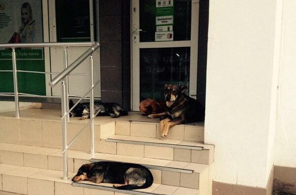 Мамочки не могут снять пособие на деток в банкомате по проспекту Корабелов из-за бродячих собак | Корабелов.ИНФО