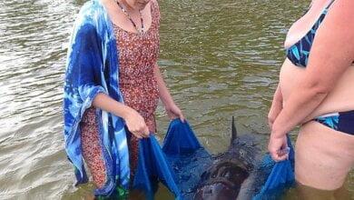 В Коблево спасли самку дельфина, которая заплыла на мель в поисках своей пары, умершей во время шторма | Корабелов.ИНФО