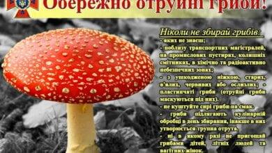 Обережно! Отруйні гриби! | Корабелов.ИНФО
