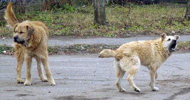 В Николаеве собака напала на маленькую девочку и укусила ее маму | Корабелов.ИНФО