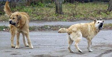 Photo of Бродячие собаки в николаевском КП «переели» на 300 тысяч гривен — отчет Госаудитслужбы