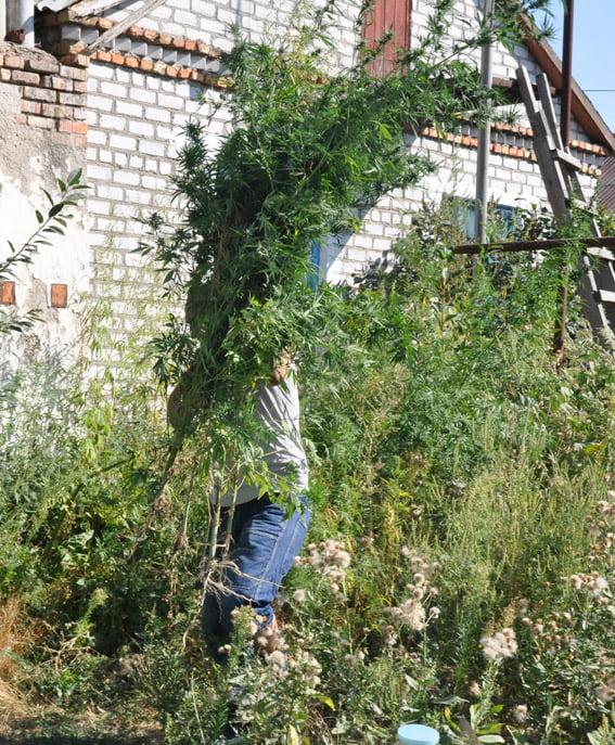 У жителя Корабельного района изъяли наркотики на 100 тысяч гривен   Корабелов.ИНФО image 2
