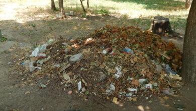 Коммунальщикам в Корабельном районе советуют не ждать осени и уже убирать опавшую листву, но те не торопятся (Видео) | Корабелов.ИНФО image 5