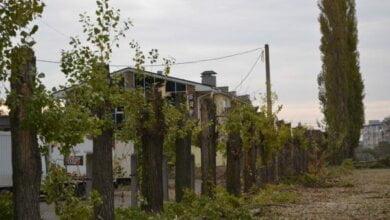 У Корабельному під виглядом реставрації шкільної огорожі обрізали багаторічні дерева   Корабелов.ИНФО image 2