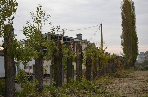 У Корабельному під виглядом реставрації шкільної огорожі обрізали багаторічні дерева | Корабелов.ИНФО image 2