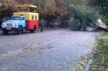 В Николаеве за ночь упали 120 деревьев, за один день с последствиями стихии в городе не справятся | Корабелов.ИНФО image 1