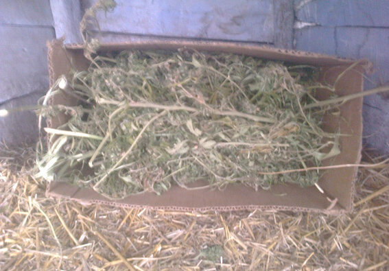 В Витовском районе расследовали кражу, а нашли 7 кг наркотиков у 30-летнего жителя | Корабелов.ИНФО image 1