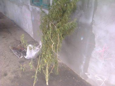 В Витовском районе расследовали кражу, а нашли 7 кг наркотиков у 30-летнего жителя | Корабелов.ИНФО image 2
