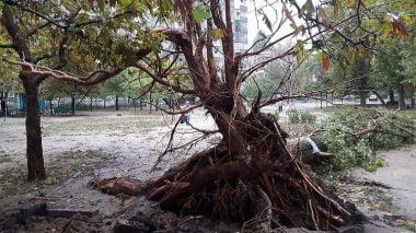 В Николаеве за ночь упали 120 деревьев, за один день с последствиями стихии в городе не справятся | Корабелов.ИНФО image 2