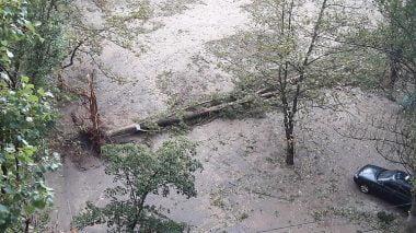 В Николаеве за ночь упали 120 деревьев, за один день с последствиями стихии в городе не справятся | Корабелов.ИНФО image 3