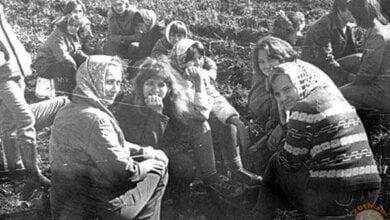 """Красные от помидор поля просто запахивались. Народная """"битва с урожаем"""" в Корабельном в 70-е годы   Корабелов.ИНФО image 2"""