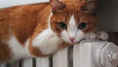 грустный кот на батарее