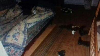 В Витовском районе задержали 30-летнего мужчину, который изнасиловал 13-летнюю девочку | Корабелов.ИНФО image 1