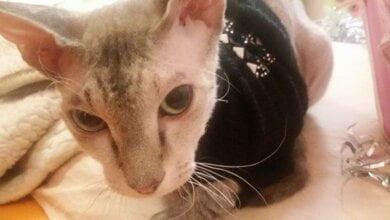 Боевики на Донбассе заминировали кошку, сделав ее живой растяжкой | Корабелов.ИНФО
