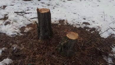 Неизвестные рубят деревья в Балабановском лесу   Корабелов.ИНФО image 2
