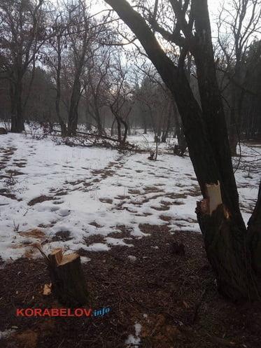 Неизвестные рубят деревья в Балабановском лесу