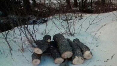 У Вітовському районі спиляли 20 дубів, але вивезти не встигли | Корабелов.ИНФО image 1