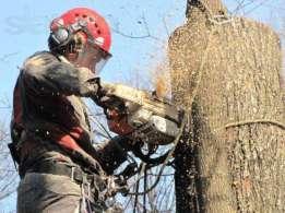 В Николаеве объявлен мораторий на снос деревьев   Корабелов.ИНФО