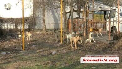 Агрессивная стая собак в Николаеве нападает на людей — городские власти бездействуют | Корабелов.ИНФО