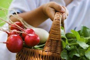 В Украине в марте падают цены на ранние овощи | Корабелов.ИНФО