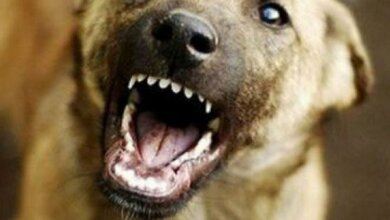 На маму с ребенком в Николаеве напали бродячие собаки, одна из них укусила женщину   Корабелов.ИНФО image 1