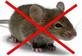 Депатрамент ЖКХ визначився, хто в багатоквартирних будинках миколаївців повинен труїти щурів і мишей | Корабелов.ИНФО
