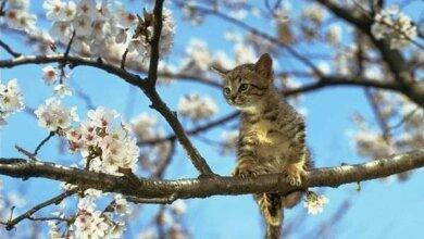 Весна возвращается: на 25 апреля в Николаеве синоптики обещают теплую погоду | Корабелов.ИНФО