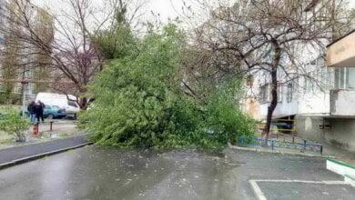 """""""Сколько времени займет уборка упавших от непогоды деревьев?"""", - жители Корабельного района   Корабелов.ИНФО image 2"""