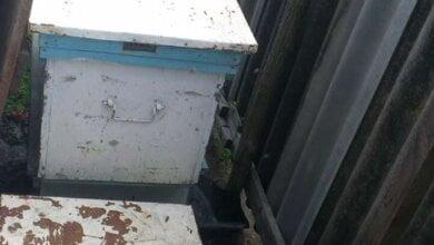 У Галіцинівському лісі поцупили 10 вуликів - за підозрою затримали жітелів с.Лимани | Корабелов.ИНФО