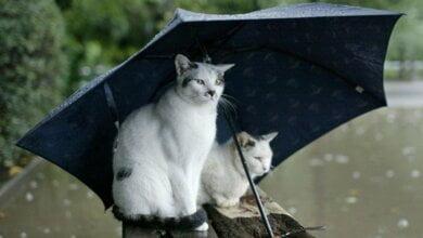 В выходные синоптики обещают дожди и грозы. Со вторника погодные условия улучшатся | Корабелов.ИНФО