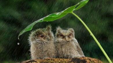 Синоптики на выходные прогнозируют в Николаеве дождь с грозами и местами град   Корабелов.ИНФО