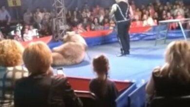 В Белой Церкви цирковой медведь напал на зрителей, есть пострадавшие (ВИДЕО) | Корабелов.ИНФО