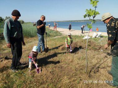 Активісти прибрали узбережжя в Широкій Балці і почали висаджувати там алею   Корабелов.ИНФО image 5